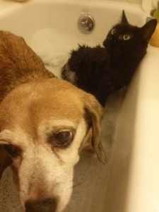 Penny and Emma sharing the tub.