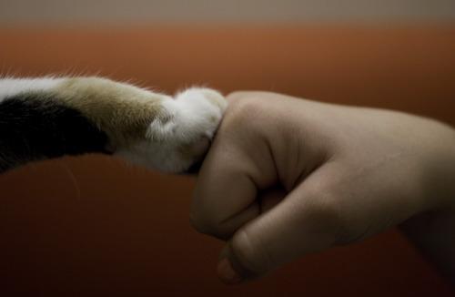 cat fist bump