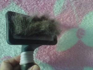 Fur . . . it sheds.