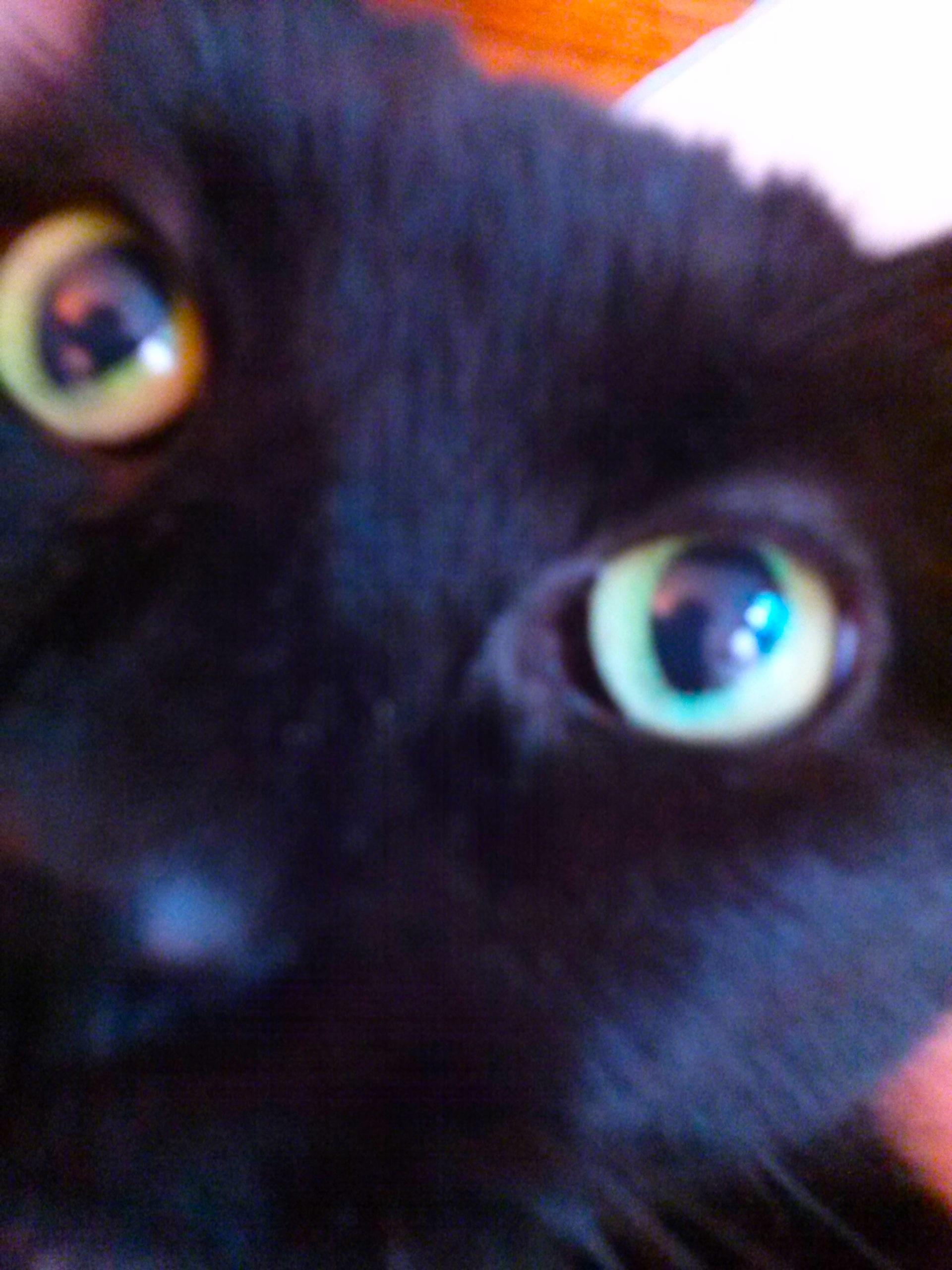 feline anatomy – Spiffy Kitty House Call Cat Grooming