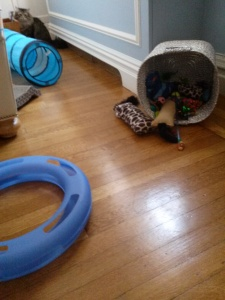 An array of toys to stimulate and to create opportunities for natural behavior such as stalking moving objects and pouncing.
