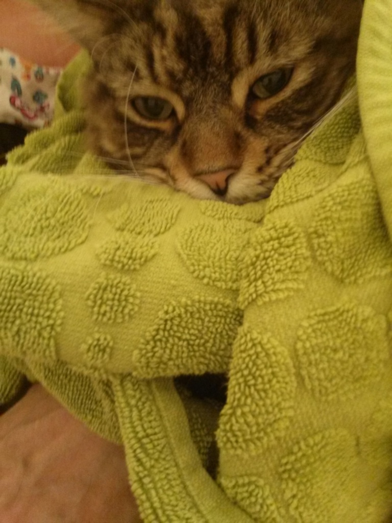 Bundle cat in a large, thick towel. Bath towels of good quality work best. You can use two towels if cat is irritable.