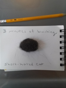 Fur from brushing a cat