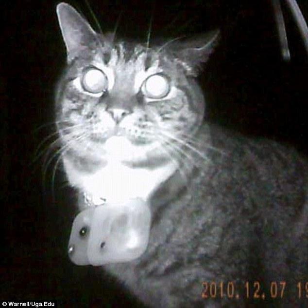 kittycam cat