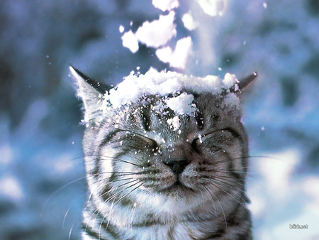 cat-and-snow