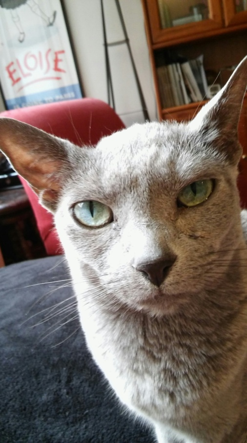 Mystic during a cat sitting visit