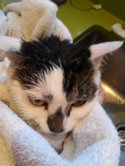 Smudge after bath