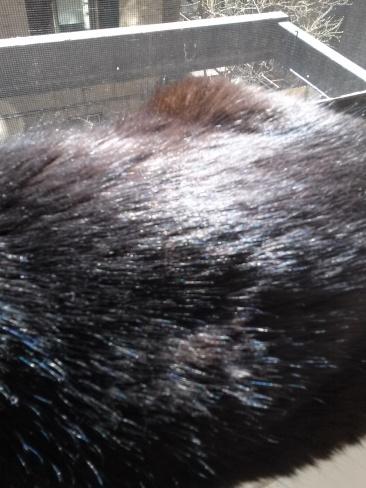 Emma's fur