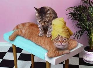 catmassage