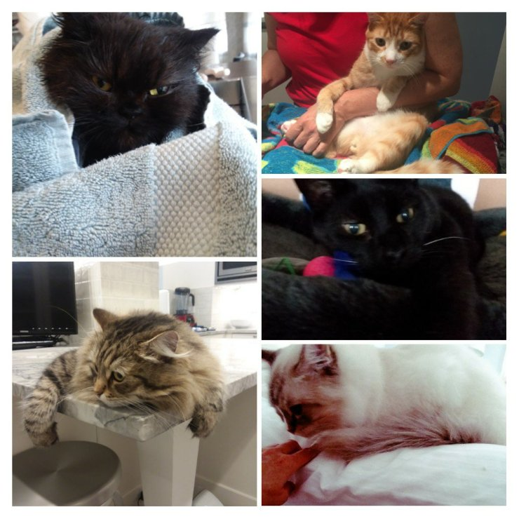 Spiffy Kitty Cat Grooming Clients