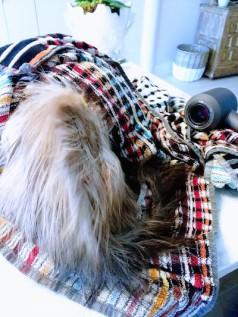 Blow drying Vish